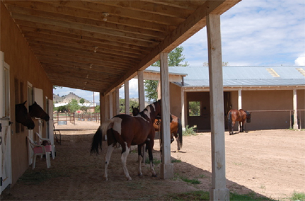 Turtle ranch nm horse boarding fabulous riding for Red barn dog kennel